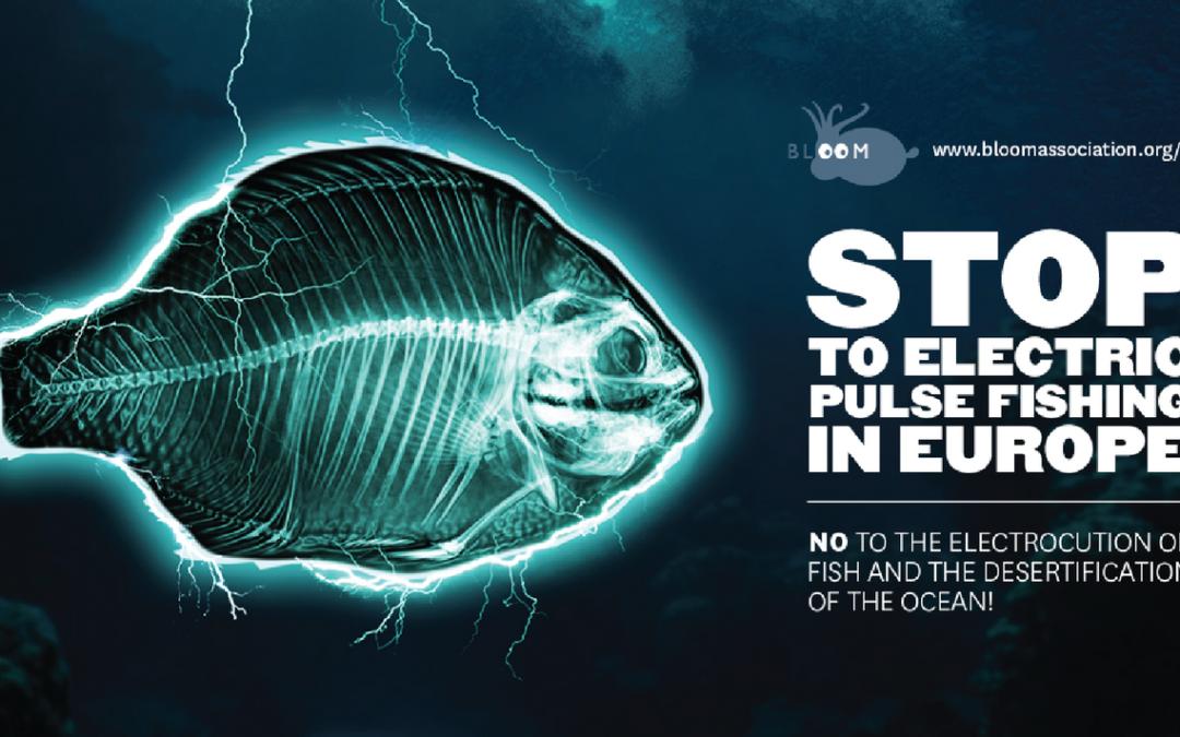 Waarom Nederland de slag om de pulsvisserij verloor