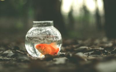De fabel van de goudvis